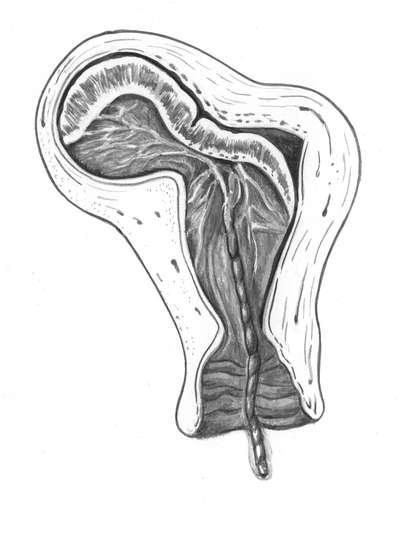 orgazm-predlezhanie-platsenti