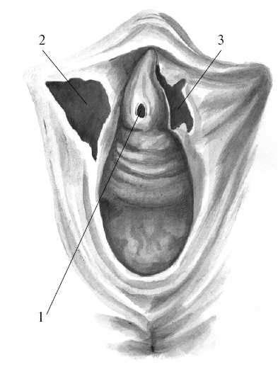 Фото женских половых органов после родов крупным планом, про