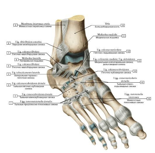 Возможно ли лечение без операции косточек на ногах