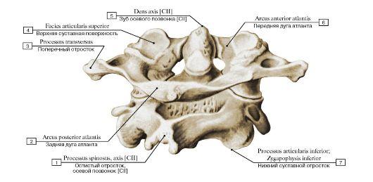 Калия оротат при циррозе