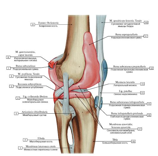 как укрепить связки коленного сустава народными средствами