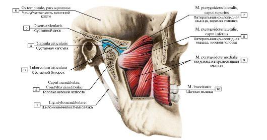 повреждению связочного аппарата височно-нижнечелюстных суставов.лечение ребенку 2 года