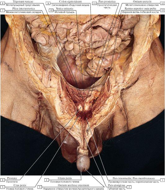 На груди стали видны вены