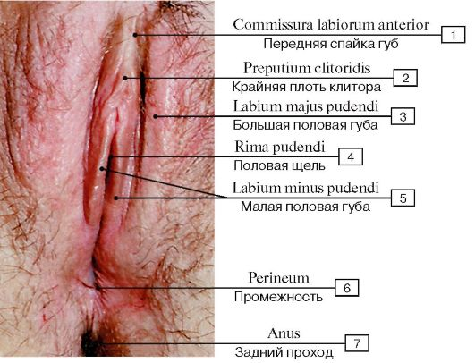 Смотреть натуральные женские органы