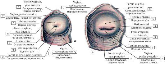 Женская вагина под микроскопом, мужик сосет у двоих
