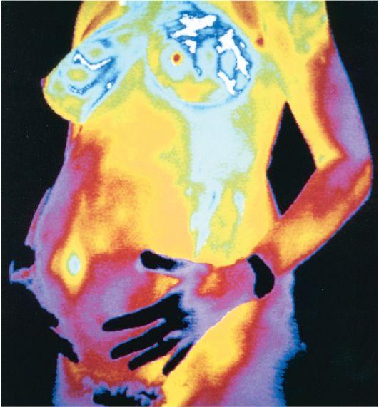 Расположение женских половых органов фото 24 фотография