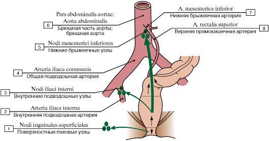 Отток лимфы от прямой кишки