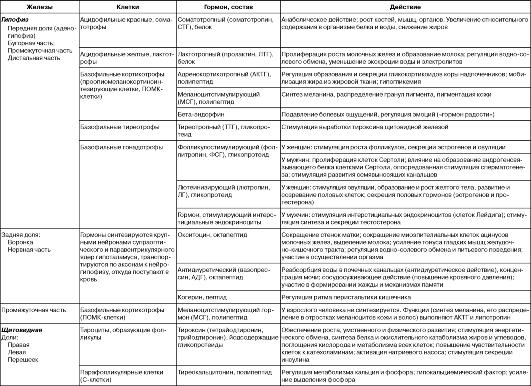 Положение эндокринных желез в