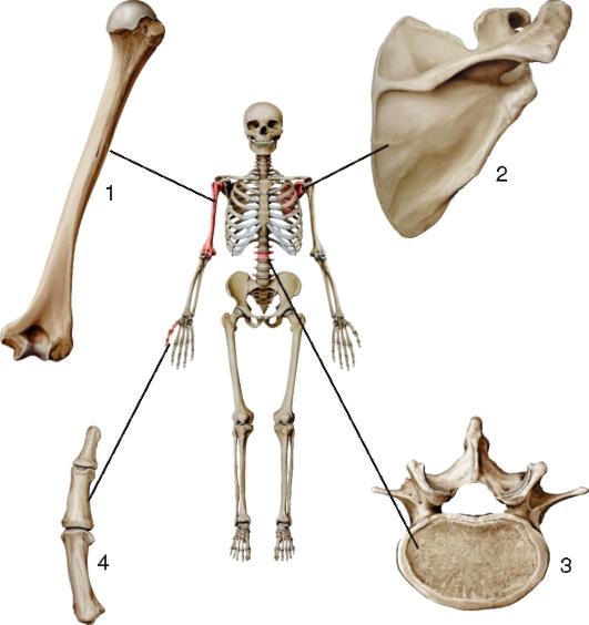 скачать бесплатно торрент кости - фото 11