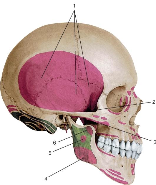 Лечение тянущей боли в шее