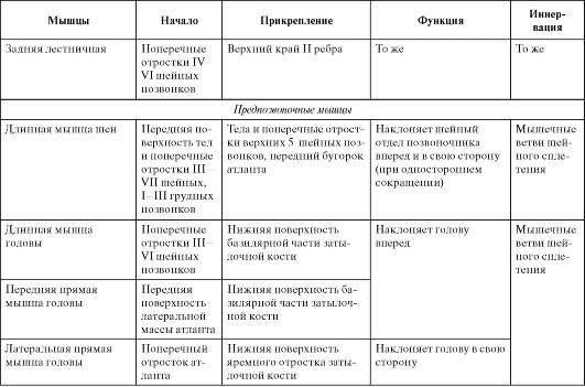 Фасции шеи по В.Н. Шевкуненко