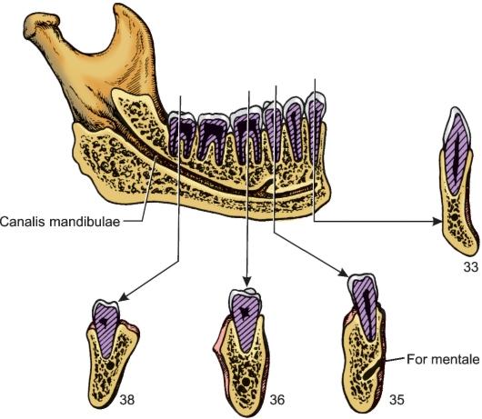 Болит челюсть при открытии рта — Консультация врача – Медицинский