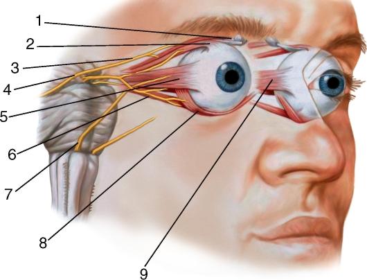Нервы глазодвигательного