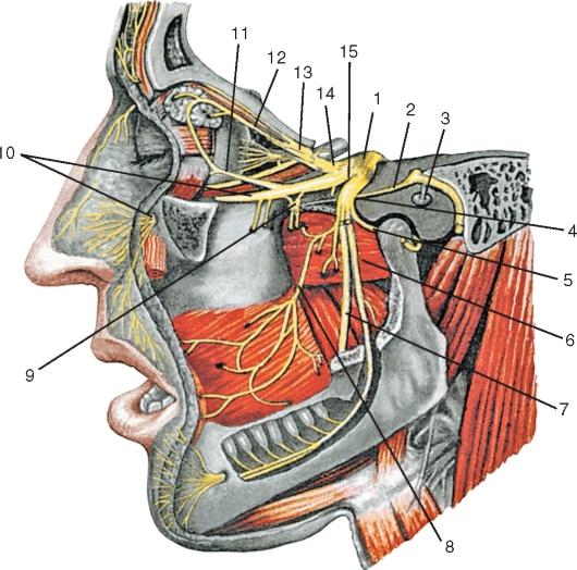 Тройничный нерв, вид с