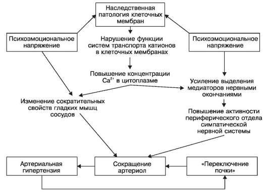 gipertonicheskaya-bolezn-patofiziologiya