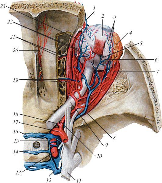 Дуплексное сканирование вен нижних конечностей цена в москве