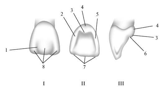 Схема. 1 - борозда