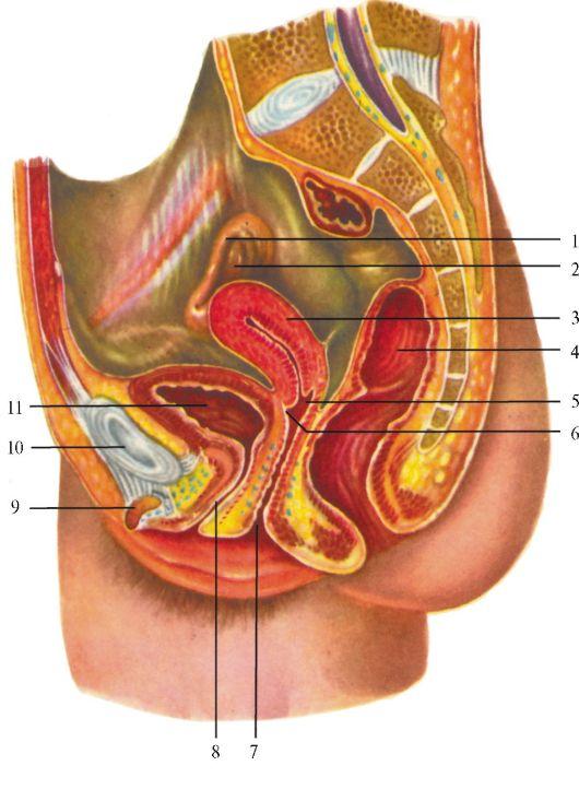 foto-vneshnih-zhenskih-polovih-organov