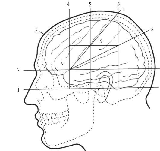 Проекционная схема черепа по