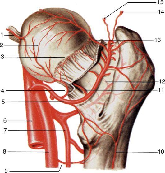 Артериальное кровоснабжение