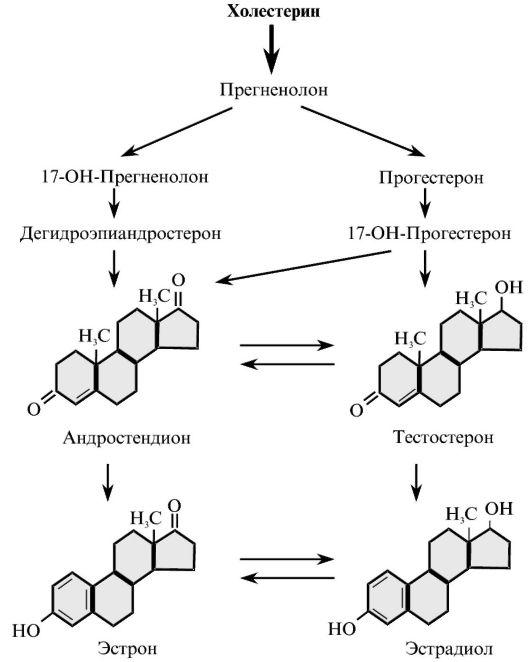 Система Нейро-Эндокринная фото