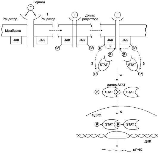 Механизм передачи сигнала