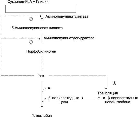Регуляция синтеза гема и