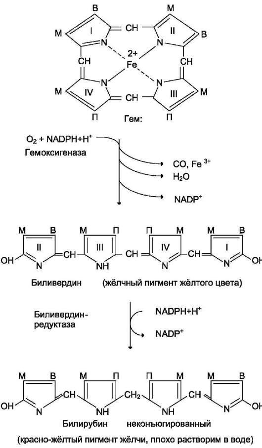Протопорфирин Ix