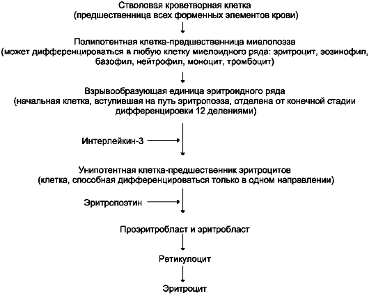 Схема дифференцировки