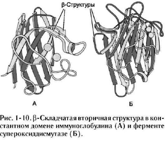 α-спиральным участком