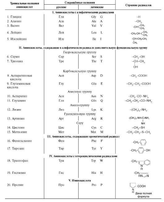 Виды аминокислот схема