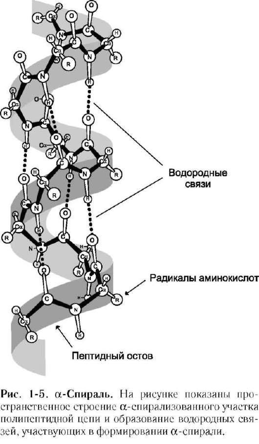 водородные связи с водой)