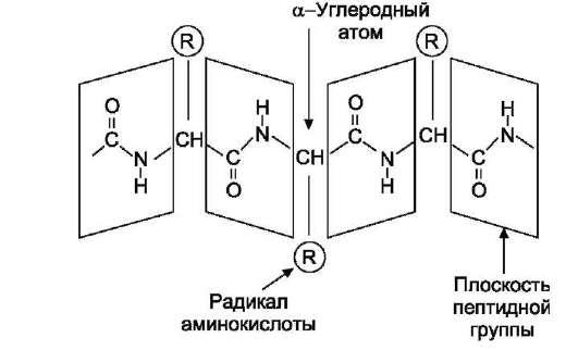 гидролиз пептидных связей