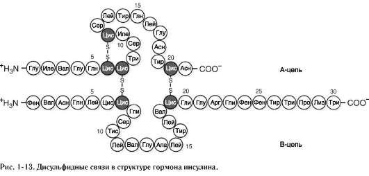 «нативная структура».