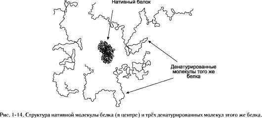 структуры нативных белков,