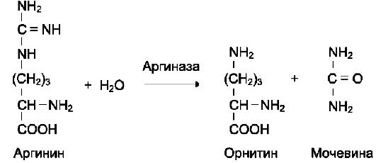 катализирующая гидролиз