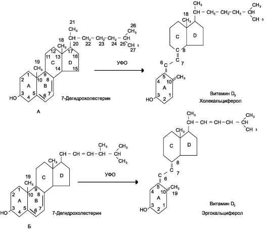 Схема синтеза витаминов D2 и