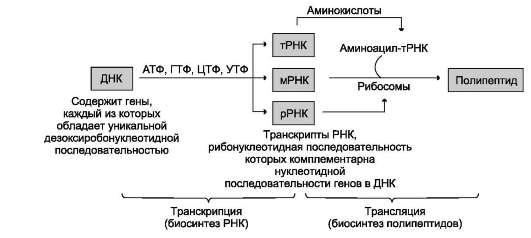 ДНК→РНК обозначает биосинтез