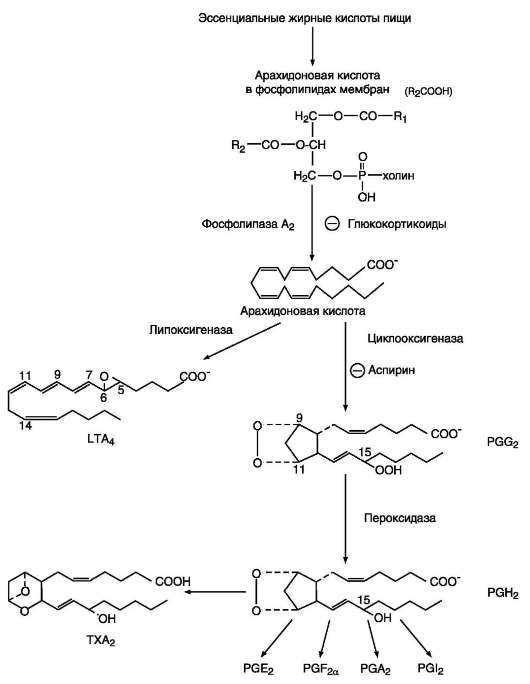 prostaglandin sythesis Complete schematic view of the 1973 prostaglandin f2α's synthesis performed by robert b woodward.