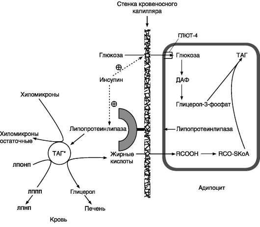 концентрации глюкозы в