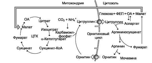 Гликолиз  Википедия