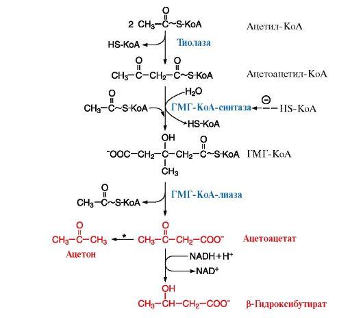 Синтез кетоновых тел в