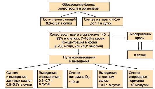 МОДУЛЬ 8 ОБМЕН ЛИПИДОВ