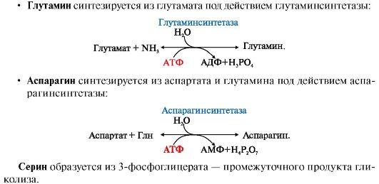 Синтез аргинина происходит в
