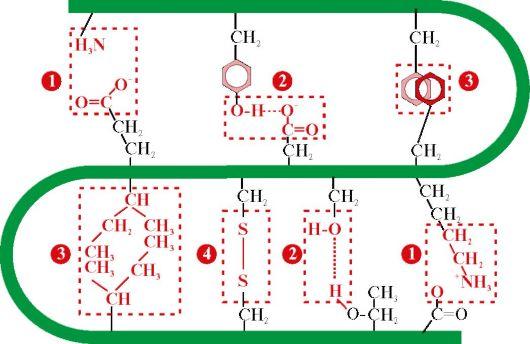 третичной структуры белка
