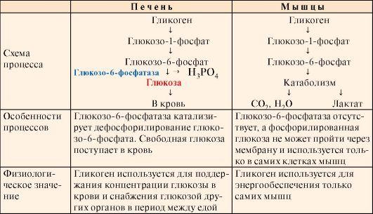 Отличия гепатита от цирроза печени