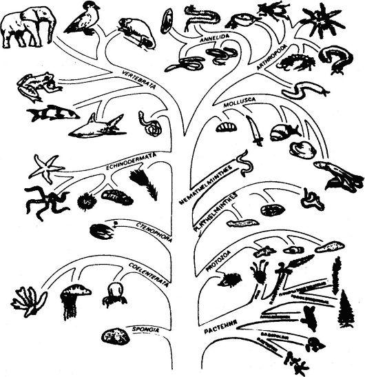 древо органического мира