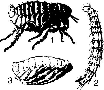клетчатка от паразитов