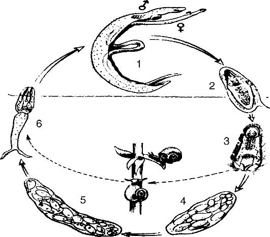 ГЛАВА X ЧЕЛОВЕК И ПАРАЗИТИЗМ