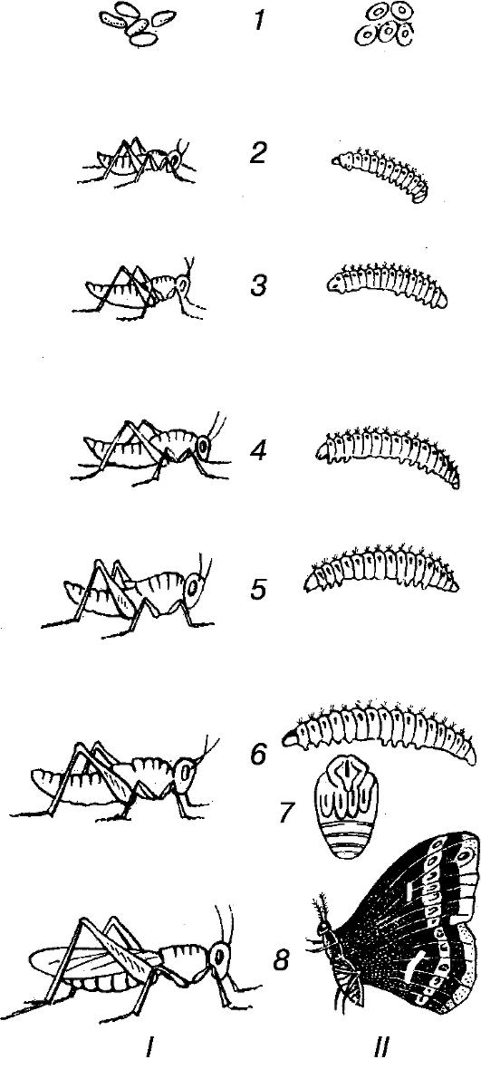 биогенетический закон геккеля-мюллера: